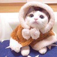 喵喵最爱猫
