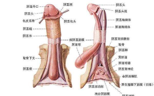 做阴茎弯曲矫正治疗效果怎么样?效果保持时间多久?
