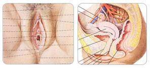 做阴蒂缩小手术多少钱?